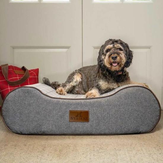 Boneo bone shaped dog bed with cockapoo