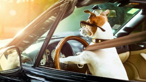 Best Dog Car Seats and Boosters