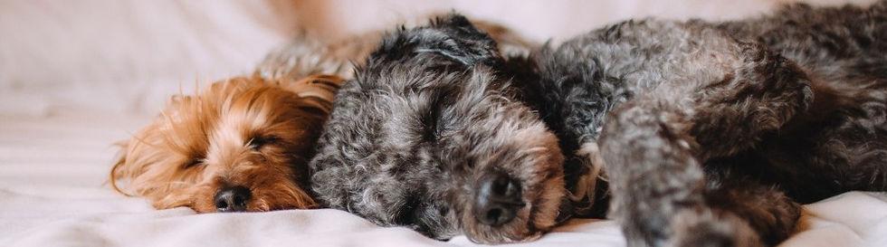 sleeping dogs on bed.jpg