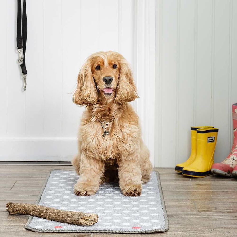 Spaniel sitting on a pet rebellion door mat