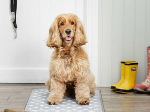 Top 10 Ways to Keep your Home Clean with a Dog