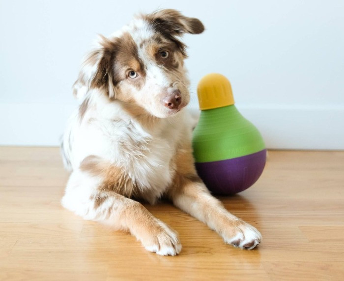 Dog with a Bob-a-lot puzzle toy