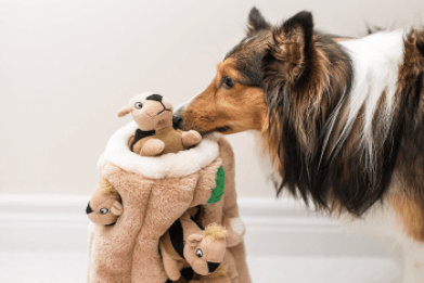 Dog playing a dog puzzle toy with squirrels