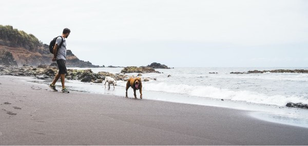 man exercising with two dogs at the beach