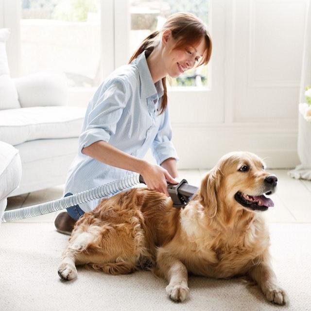 Dyson groom tool on dogs fur