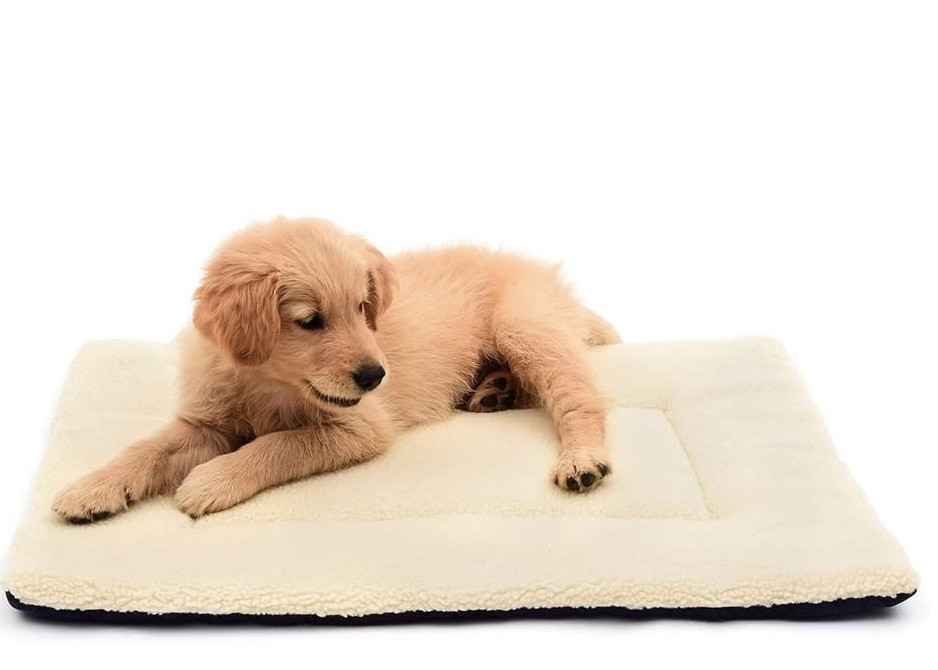 puppy lying on a crate bed in cream fleece