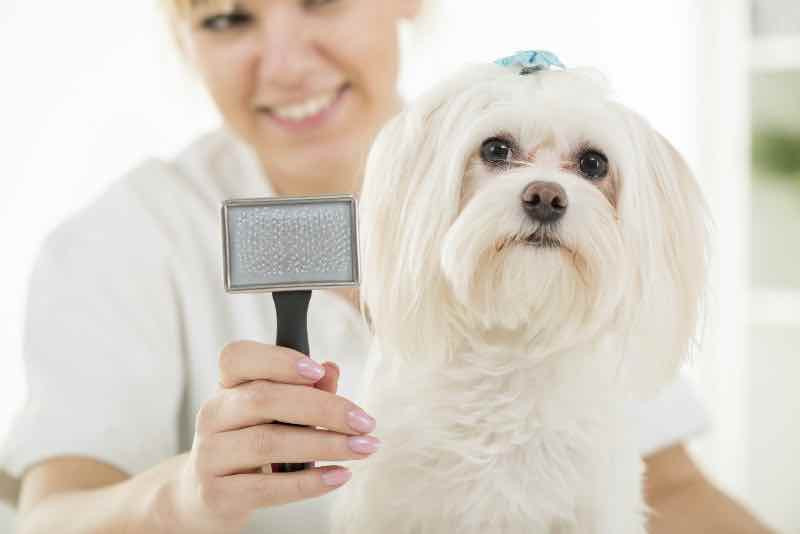 Lady grooming a dog with a metal brush