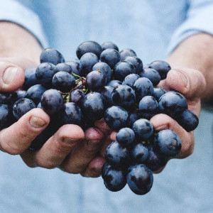A handful of toxic black grapes