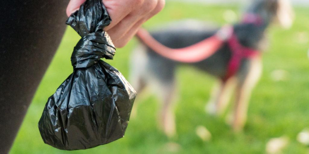 Dog lover holding a poo bag in hand and a dog on lead on a dog walk in the park