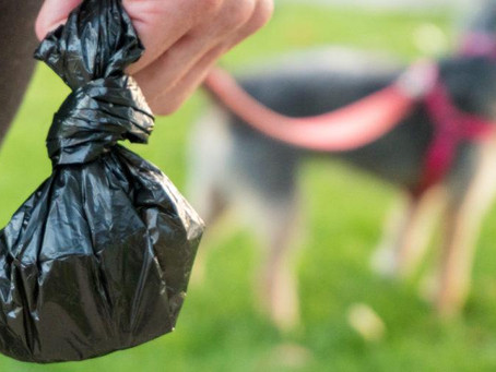 Best Dog Poo Bags Review - The Scoop on the Poop