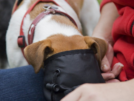 Top 10 Stylish Dog Treat Bags and Pouches