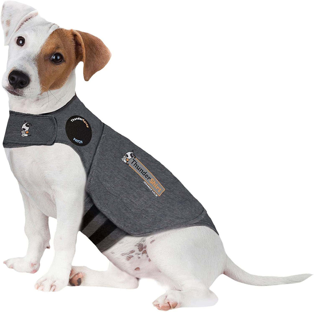 Dog in a Thundershirt anxiety coat