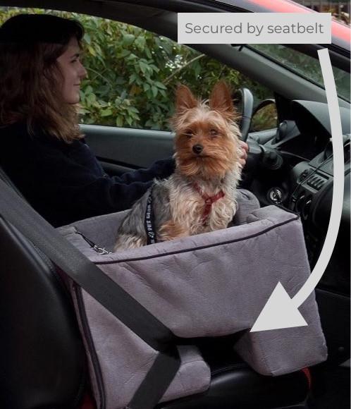 Yorkie in a Petgear car seat
