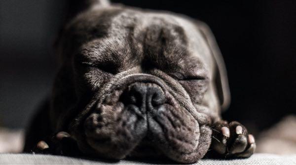 Cute puppy asleep