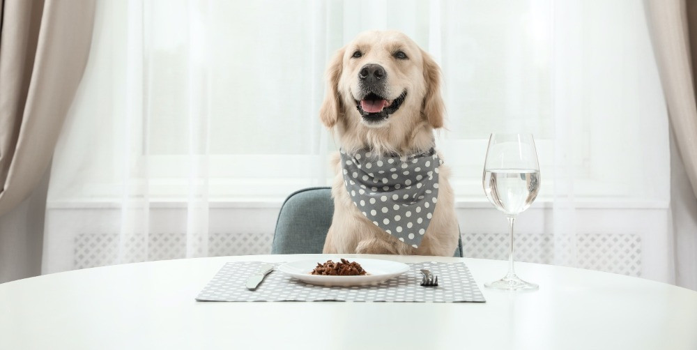 Dog sitting at a table wearing a bandana with dog food on a plate