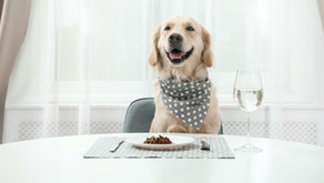 Best Tailored Dog Foods Review 2021 : Upgrade Mealtimes