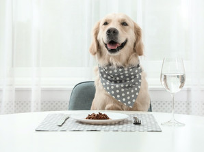 Best Tailored Dog Foods Review