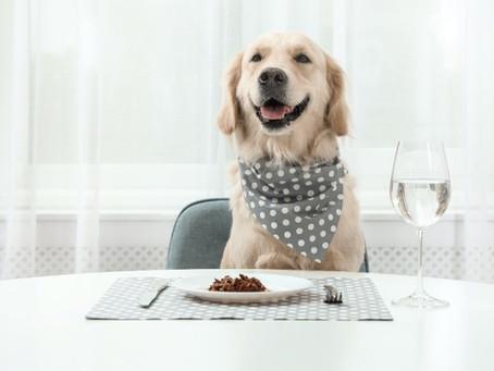 Best Tailored Dog Foods 2021 : Upgrade Mealtimes