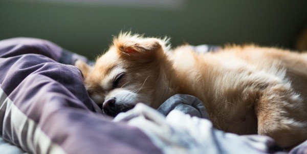 calm puppy laying on bedsheets