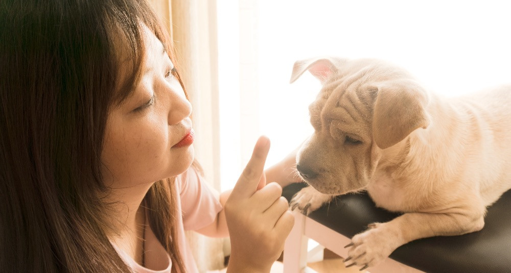 The hand gesture for stop to help puppy understand body language