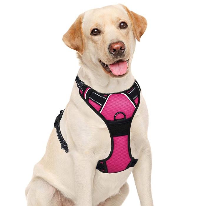 Woman walking a dog on the beach wearing a Eagloo dog harness