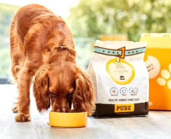 spaniel dog eating pure dog food