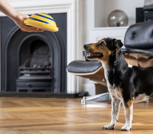 Dog playing an indoor dog game