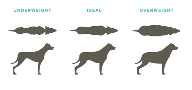 3 profiles of dog shapes - underweight, ideal and overweight