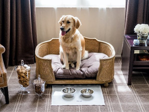 Guide to ... Choosing a Dog-Friendly Holiday