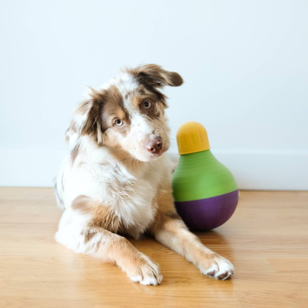 dog playing with Starmark Bob-a-lot dog toy