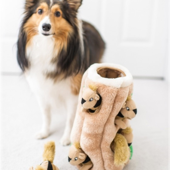 Dog with a Hide a squirrel dog puzzle toy