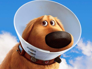 The Best Alternatives to the Dog Cone of Shame