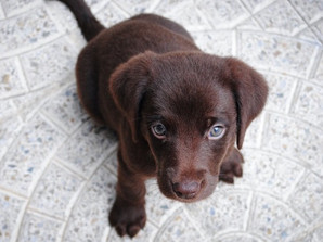 Dog Names : A Guide to Choosing a Dog Name