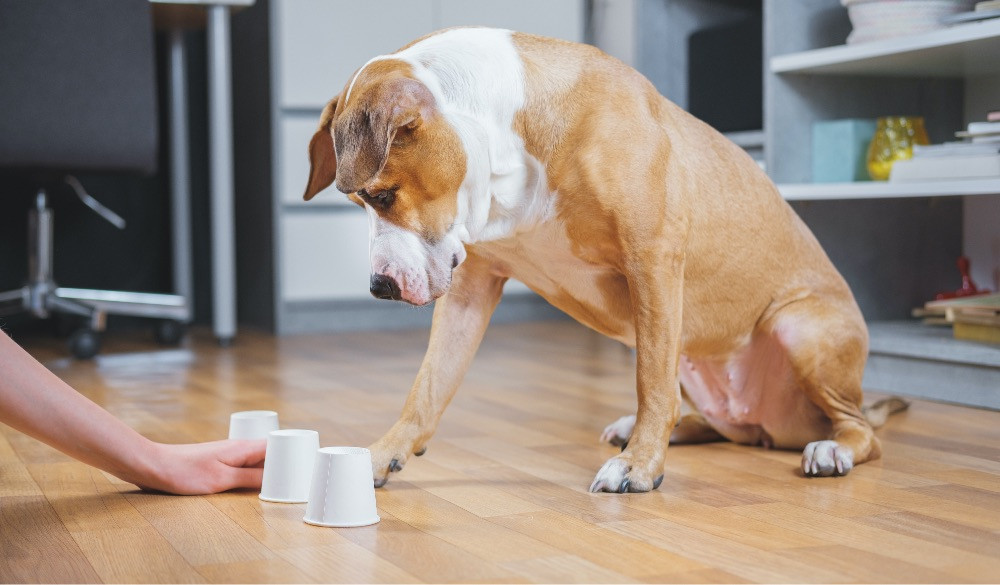 Puppy playing the shell game with paper cups and dog treats