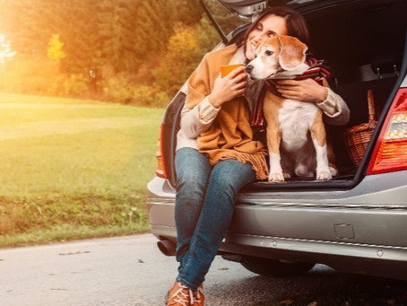Best Car Boot Liners for Dogs