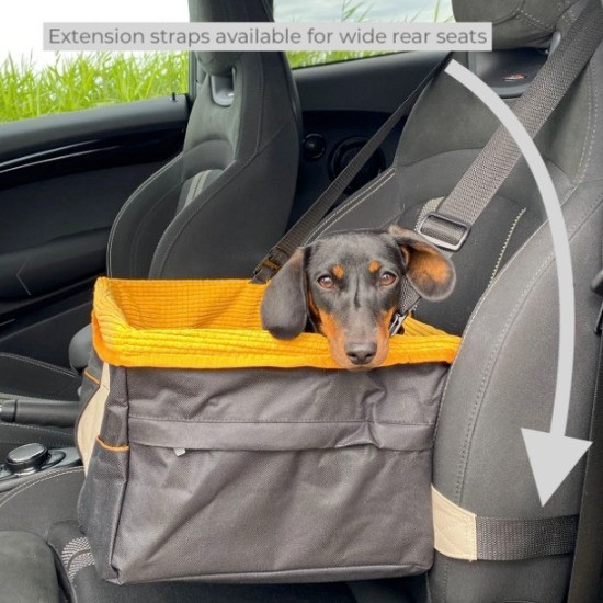 Dog in a Kurgo Skybox Booster Seat