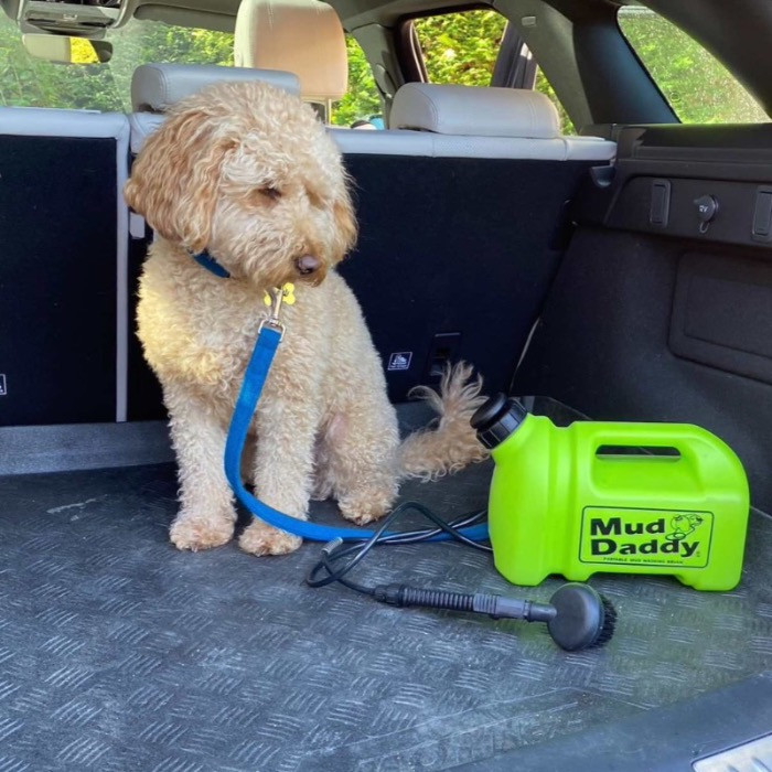 Dog in car with a green Mud Daddy 5l portable shower
