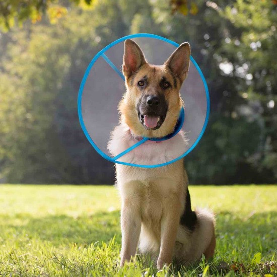 Dog wearing a traditional dog cone
