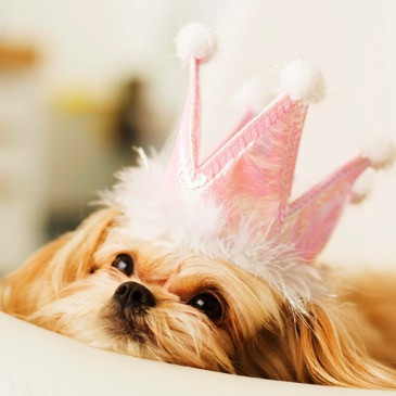A dog laying on a blanket wearing a pink crown