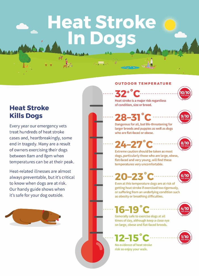 Infographic outlining temperatures and heat stroke in dogs