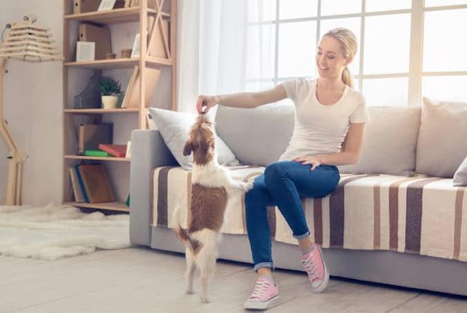Dog playing indoor dog game