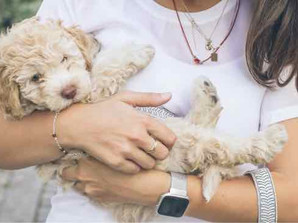 5 Common Mistakes Puppy Owners Make