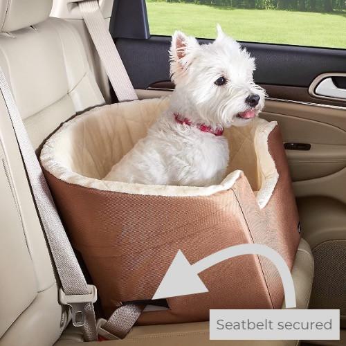 Dog in an AmazonBasics car booster seat