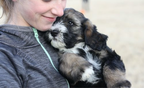 Girl carrying a puppy in her arms