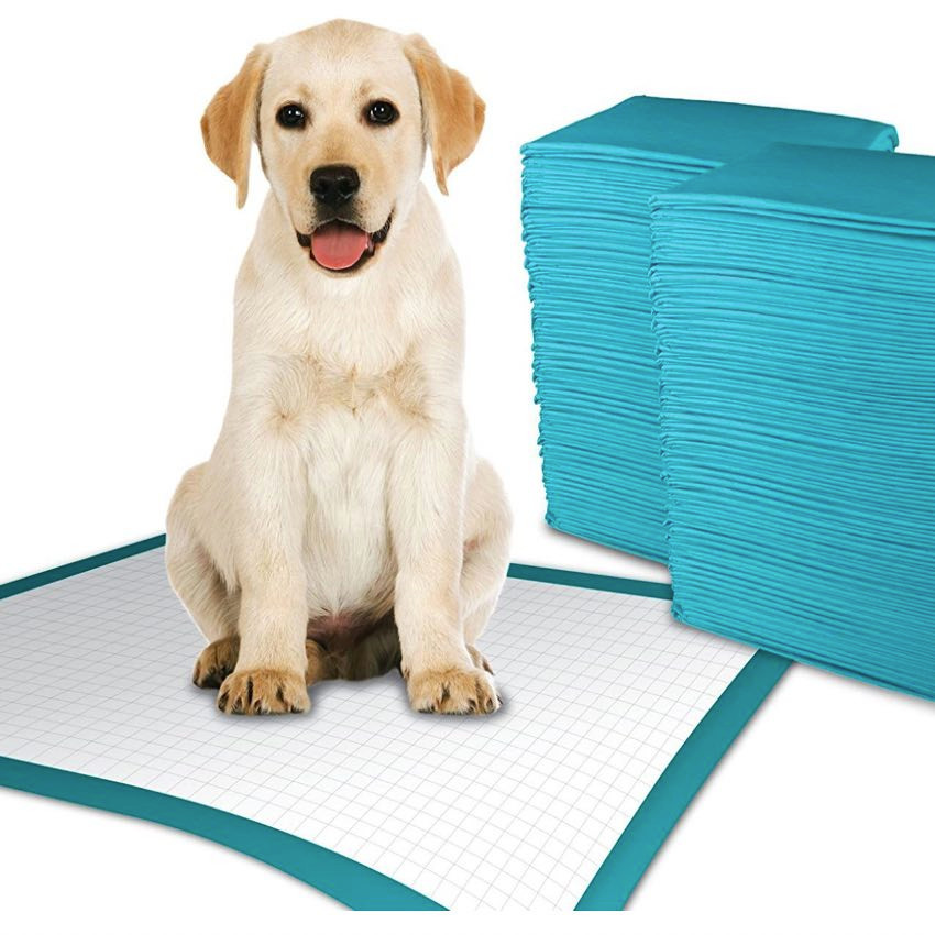 Puppy sitting with puppy training pads