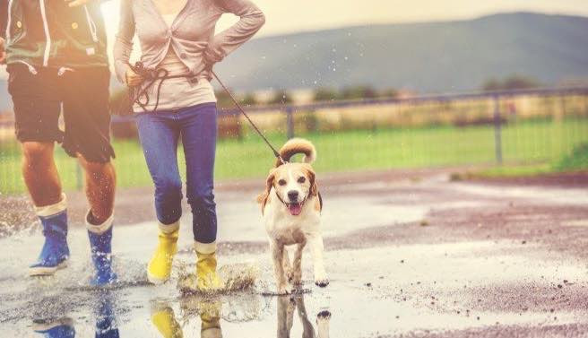 Dog owners walking their dog in the rain