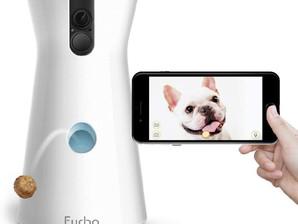Top 10 Cool Dog Gadgets
