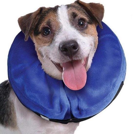 Dog wearing an inflatable dog collar