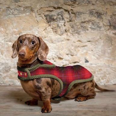 A dachshund in a red tartan dog coat by Houndstar