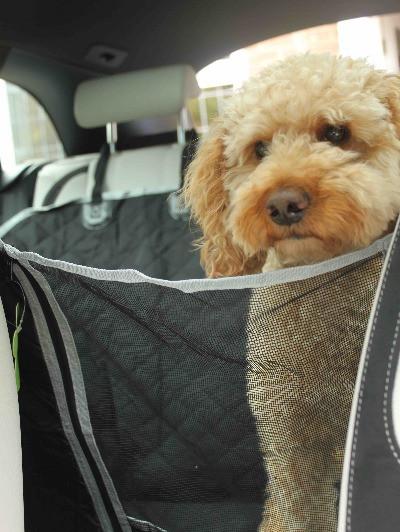 Pecute dog car seat hammock with mesh window